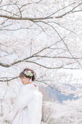 290904_新潟_桜