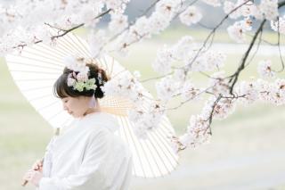 290902_新潟_桜