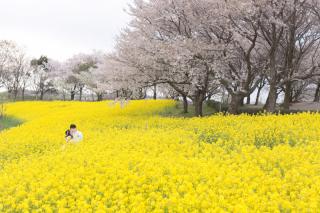 292211_新潟_お花畑