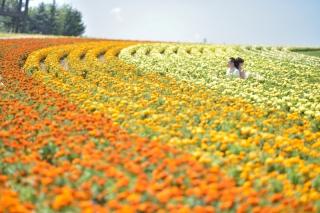 170360_北海道_【Summer-夏】7.8月富良野ラベンダー&お花畑!!!