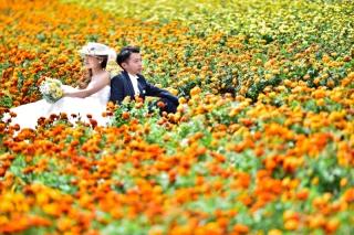 170345_北海道_【Summer-夏】7.8月富良野ラベンダー&お花畑!!!
