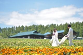 94715_北海道_【Summer-夏】7.8月富良野ラベンダー&お花畑!!!