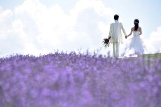 148208_北海道_【Summer-夏】7.8月富良野ラベンダー&お花畑!!!
