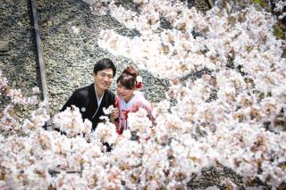 253872_京都_京都×ロケーション(桜)①
