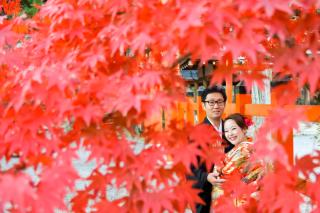 278174_京都_京都×ロケーション(桜)①