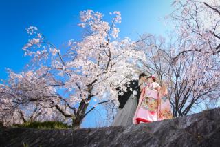253873_京都_京都×ロケーション(桜)①