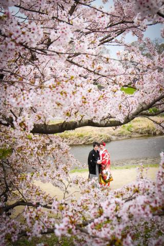 253874_京都_京都×ロケーション(桜)①
