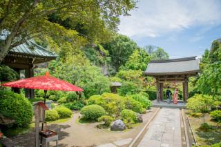 156414_神奈川_夏の写真(7月下旬・8月)