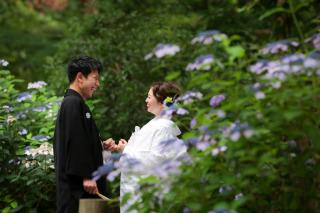 211534_神奈川_梅雨・初夏の写真(6月中旬・7月中旬)紫陽花のシーズン