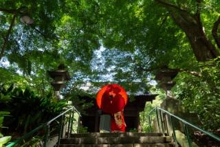 213546_神奈川_夏の写真(7月下旬・8月)