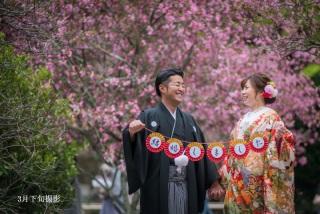 255471_神奈川_春の写真(3月・4月中旬)桜のシーズン