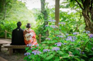 146444_神奈川_新緑の季節の写真(4月中旬・5月・6月上旬)