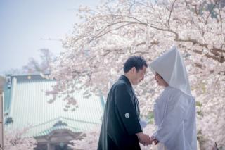 138478_神奈川_春の写真(3月・4月中旬)桜のシーズン