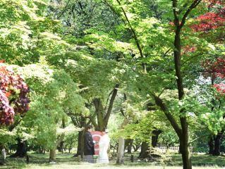 126491_岡山_緑