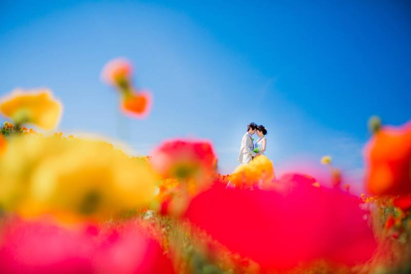 Photo&Movie Colors_トップ画像2