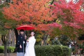 243370_大阪_autumn~秋フォト~