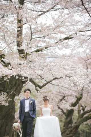 306723_東京_桜・梅