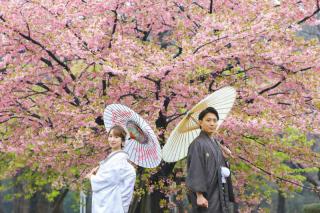 306707_東京_桜・梅