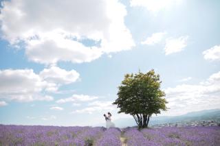 239535_北海道_【富良野ラベンダー&お花畑-夏summer】大人気観光地を巡る