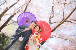 239469_北海道_【桜ロケフォト-春spring】GWに見頃を迎える日本のお花