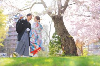 239468_北海道_【桜ロケフォト-春spring】GWに見頃を迎える日本のお花