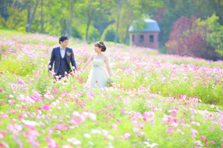 239551_北海道_【コスモス-秋-autumn】淡いピンクで可愛らしく