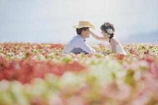 239534_北海道_【富良野ラベンダー&お花畑-夏summer】大人気観光地を巡る