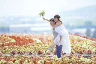 239544_北海道_【富良野ラベンダー&お花畑-夏summer】大人気観光地を巡る