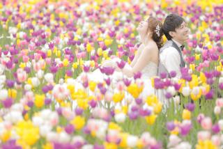 239474_北海道_【チューリップ-春spring】カラフルなお花の中で楽しく撮影