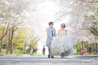 244662_北海道_【桜ロケフォト-春spring】GWに見頃を迎える日本のお花