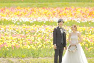 244896_北海道_【チューリップ-春spring】カラフルなお花の中で楽しく撮影