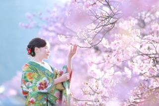 245154_静岡_伊豆の河津桜(2月末~3月初旬)