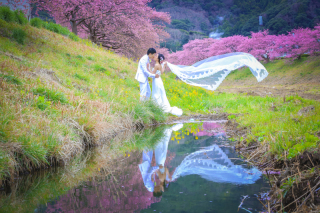 242228_静岡_伊豆の河津桜(2月末~3月初旬)