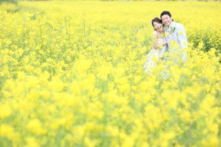 245148_静岡_伊豆の河津桜(2月末~3月初旬)