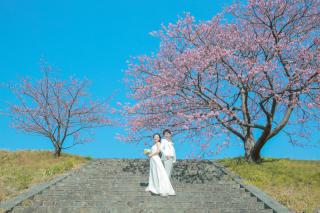 293158_静岡_伊豆の河津桜(2月末~3月初旬)