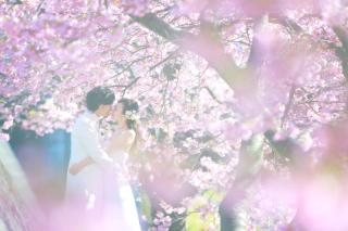 245150_静岡_伊豆の河津桜(2月末~3月初旬)