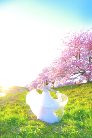 245147_静岡_伊豆の河津桜(2月末~3月初旬)