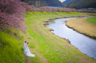 242227_静岡_伊豆の河津桜(2月末~3月初旬)