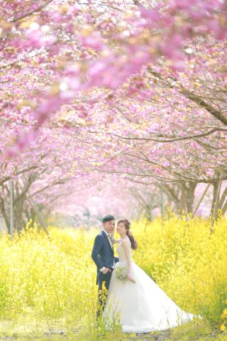 209938_静岡_伊豆の河津桜(2月末~3月初旬)