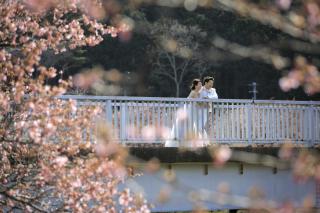 242233_静岡_伊豆の河津桜(2月末~3月初旬)