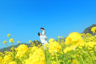 276118_静岡_伊豆の河津桜(2月末~3月初旬)
