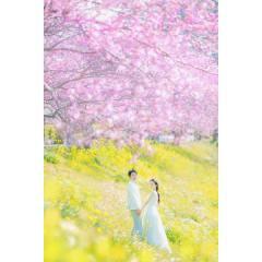 245149_静岡_伊豆の河津桜(2月末~3月初旬)