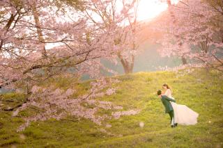 209929_静岡_伊豆の河津桜(2月末~3月初旬)
