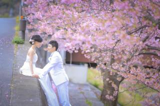 242232_静岡_伊豆の河津桜(2月末~3月初旬)