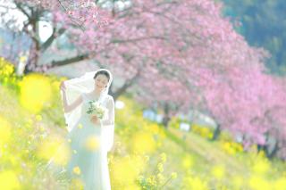 245153_静岡_伊豆の河津桜(2月末~3月初旬)