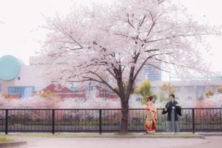 167088_徳島_祇園・嵐山・大阪1