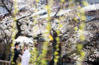 272836_京都_春撮影