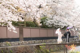272839_京都_春撮影