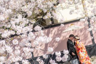 272848_京都_春撮影