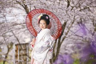 246581_群馬_和装で桜ロケーション